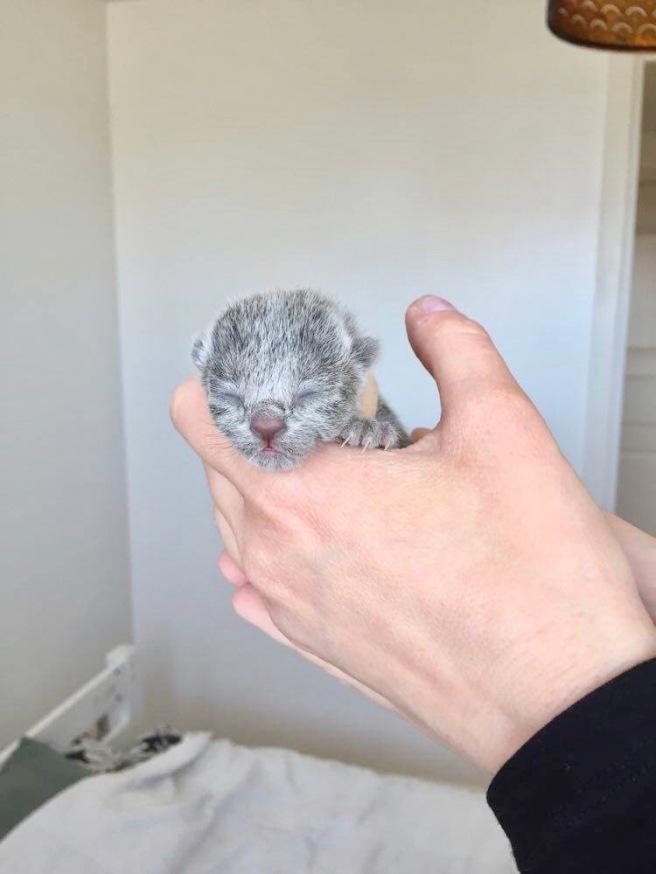 My Kiwi
